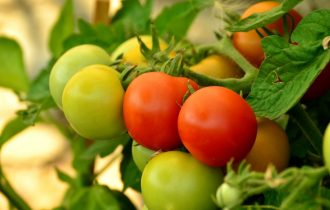 tomatoes-879441_1920-1030x711